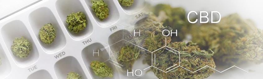 Sprawdzam #7 – Medyczna marihuana