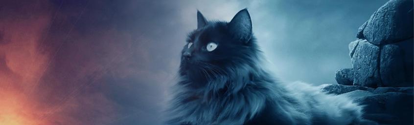 Nocny Marek – koty