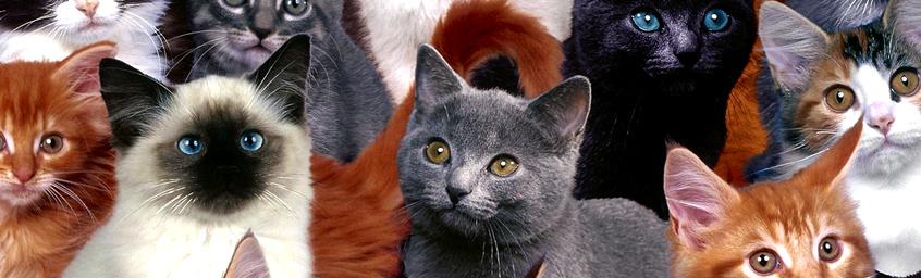 Luźne Gatki – Więcej kotów!